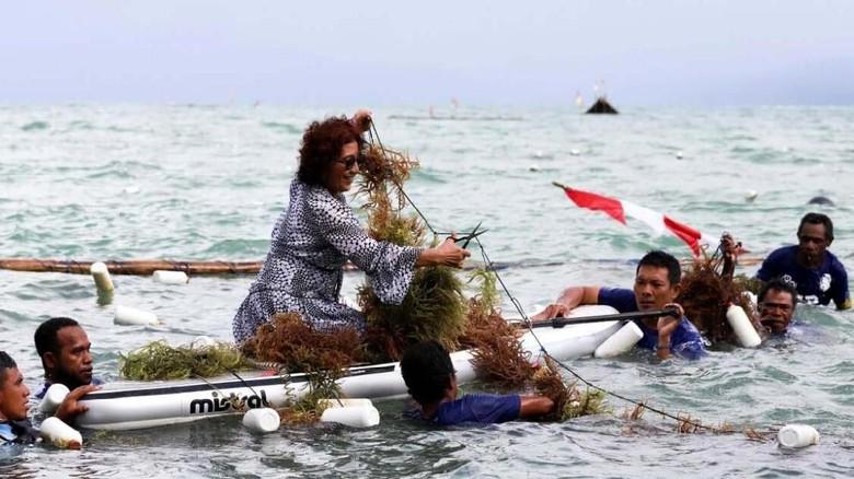 Ilustrasi, saat Menteri Susi panen rumput laut di Kabupaten Fakfak (Dok. KKP)