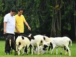 Jokowi: Saya Hampir Tiap Hari Mesra dengan Pak Airlangga