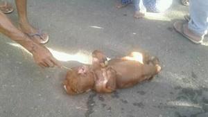 Polisi Telusuri Heboh Isu Sapi Mirip Manusia di Gorontalo