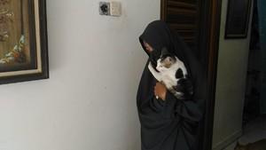 Wanita Bercadar Pemelihara 11 Anjing Jual Kripik, Suami Tak Kerja