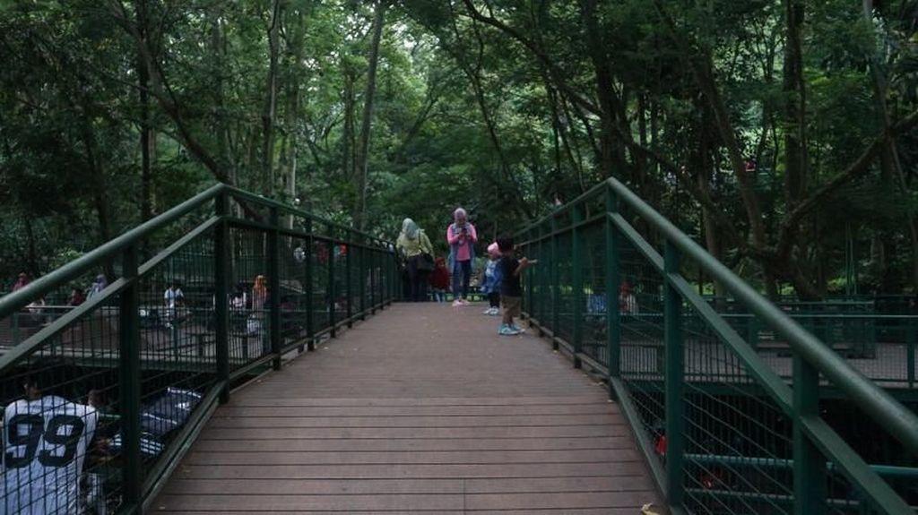 Jalan-jalan Santai di Forest Walk Bandung