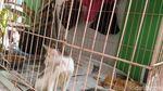 Ini Hesti, Wanita Bercadar yang Pelihara 11 Anjing