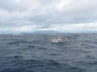 Teluk Kiluan merupakan surganya lumba-lumba hidung botol dan hidung panjang di Lampung. Untuk menuju pulau ini kamu bisa menyewa kapal. (Chandra Egy Setiawan/dTraveler)