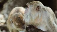 Kejam! Viral Video Monyet yang Dicat Merah di Malaysia
