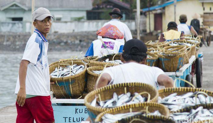 Ratusan nelayan Teluk Semaka, Lampung, memanen hasil tangkapan mereka hasilnyapun langsung dijual di Dermaga itu. Biasanya para nelayan mulai merapat ke dermaga sekitar pukul 10.00 sampai dengan 12.00. Sampai saat ini harga ikan di dermaga relatif stabil.