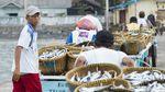 Panen Ikan di Teluk Semaka, Lampung