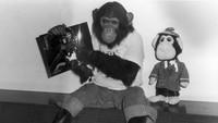 Ia bahkan kerap diberikan pakaian yang mirip dengan pelantun Thriller itu. Hulton Archive/Getty Images.