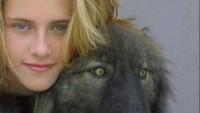 Kristen Stewart dalam kehidupan nyata ternyata juga memiliki seorang penjaga yakni serigala hitam yang diberinama Jack. (Dok. Instagram)