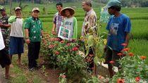 Rahasia Petani Banjarnegara Usir Hama dengan Bunga Refugia