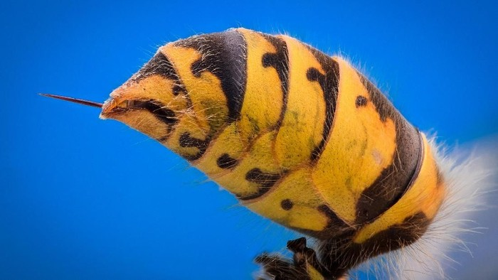 Pria berusia 66 tahun yang harus kehilangan nyawanya karena disengat tawon. (Foto: Thinkstock)