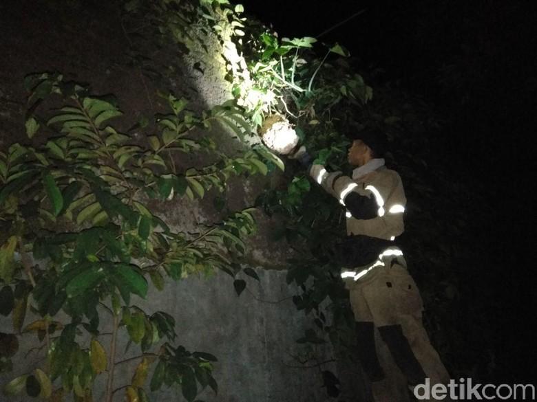 Diserang Tawon, Ibu Rumah Tangga di Bandung Dilarikan ke RS