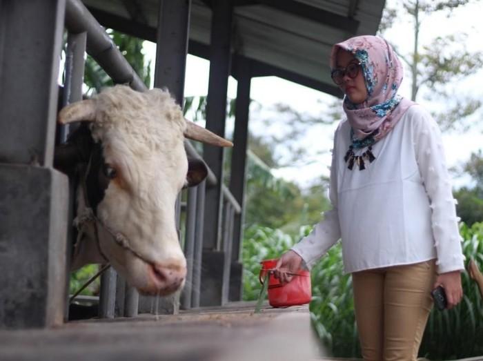 Kampung Susu Kalipucang Paket Lengkap Wisata Di Pasuruan