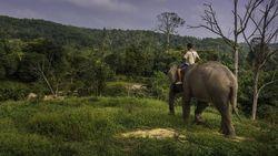 Aktivis di Riau Lanjutkan Kamping Protes Habitat Gajah Jadi Jalan Lingkar