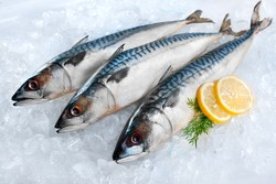 Heboh Ikan Makarel Bercacing, Ini Bedanya Ikan Sarden dan Ikan Makarel