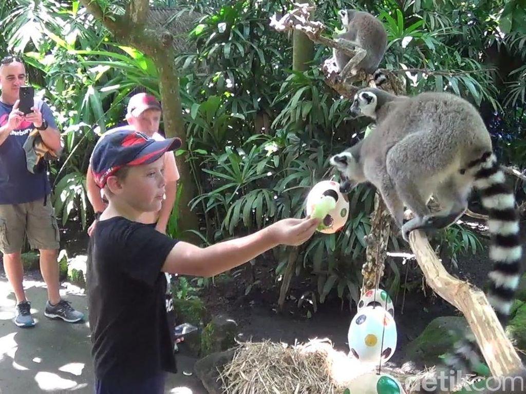 Saat Harimau dan Lemur Ikut Perayaan Paskah