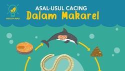 Infografis: Asal Muasal Ikan Makarel Bisa Mengandung Cacing Anisakis