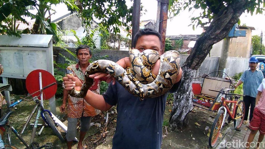 Serba-serbi Dunia Ular di Indonesia