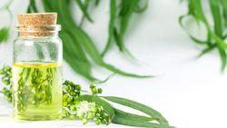Fakta di Balik Viral Klaim Minum Minyak Kayu Putih Sembuhkan COVID-19