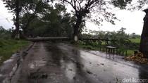 Pohon Tumbang di Pasuruan Tutup Jalan Penghubung Antar Kecamatan