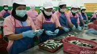 Pasca Temuan Cacing Parasit, Pabrik Ini Liburkan Ribuan Buruh