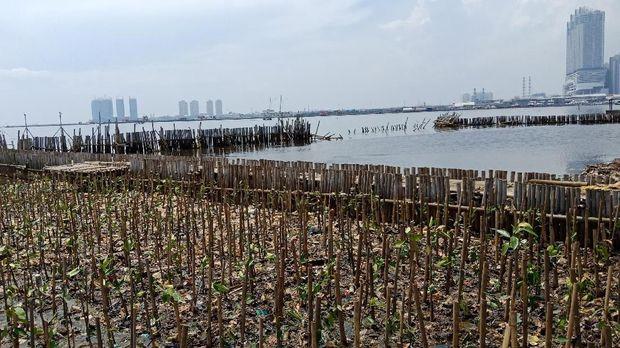Ribuan mangrove ditanam di Teluk Jakarta
