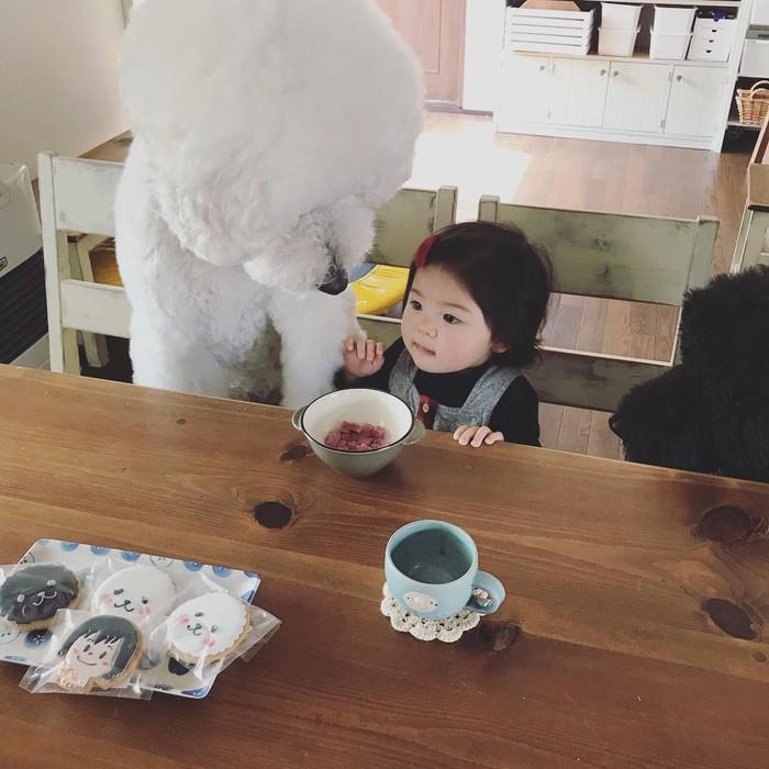 Mame, seorang gadis kecil asal Jepang dan sahabatnya Riku, anjing poodle yang menggemaskan memang sangat akrab. Mame yang sedang makanpun ditemani oleh anjing kesayangannya. Di meja juga terdapat cookies icing berbentung lucu dari sahabat ibu Mame. Foto: Instagram @tamaneqi.qoo.riku
