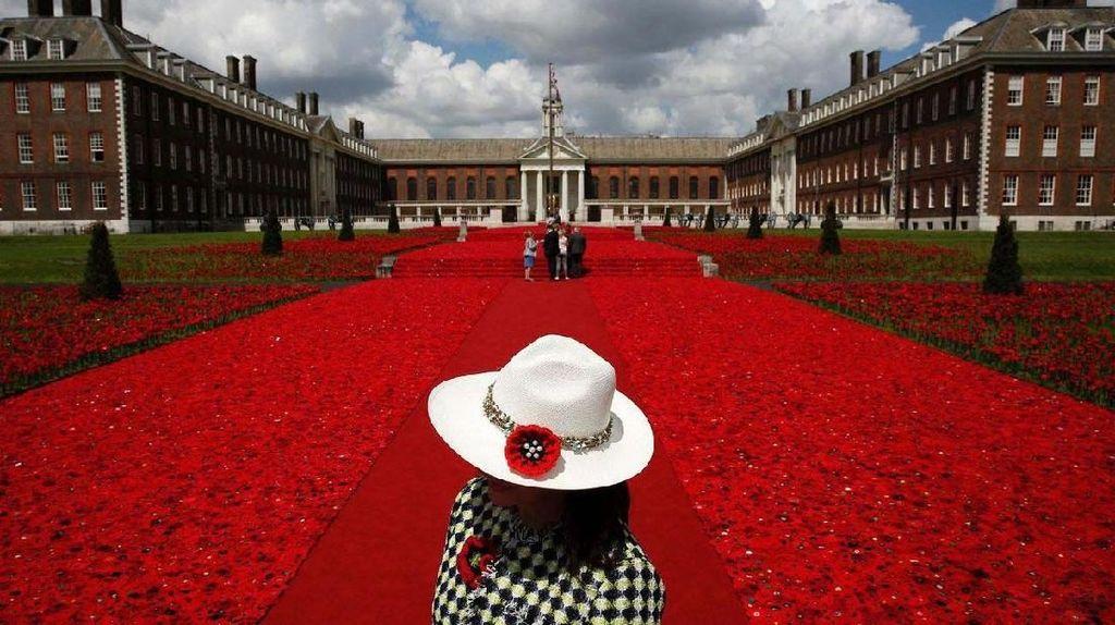 Indahnya Hamparan Karpet Bunga di Berbagai Belahan Dunia