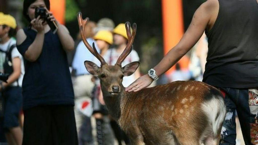 Cukup Sudah, 9 Rusa Mati di Jepang Karena Sampah Plastik