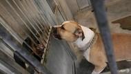 Pecinta Satwa Polisikan Kasus 6 Anjing Disiram Air Panas di Jakpus