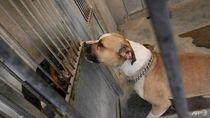 Viral Razia Anjing dan Kucing, Pemprov DKI: Hanya Sosialisasi Hewan Rabies