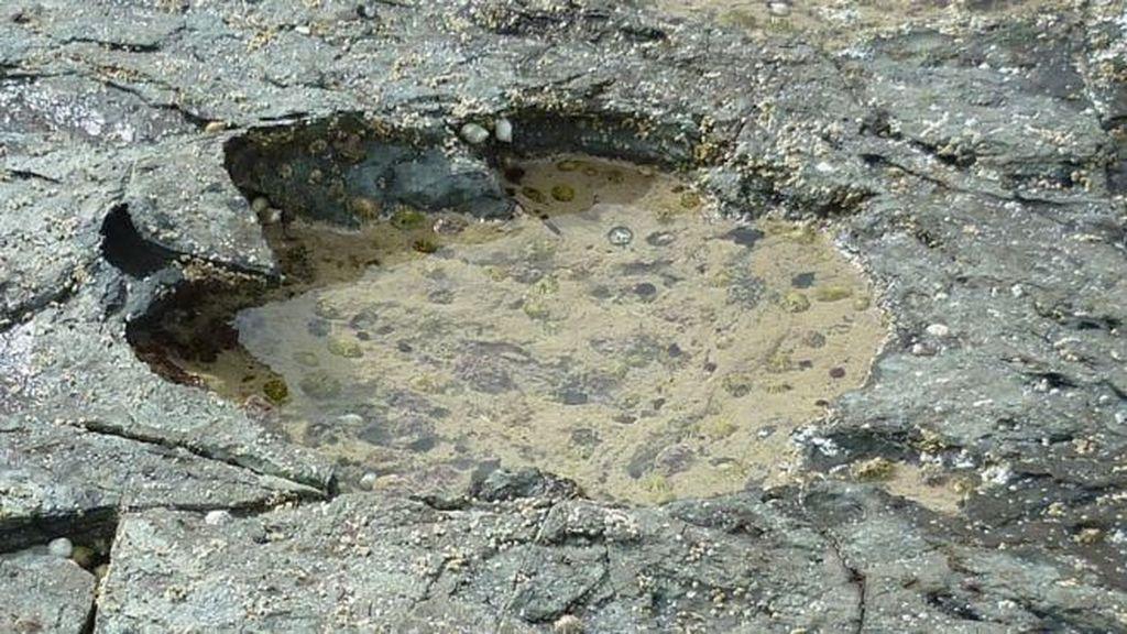 Jejak Kaki Dinosaurus Umur 170 Juta Tahun Ditemukan di Skotlandia