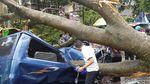 Begini Dahsyatnya Badai di Sukabumi yang Tumbangkan Belasan Pohon