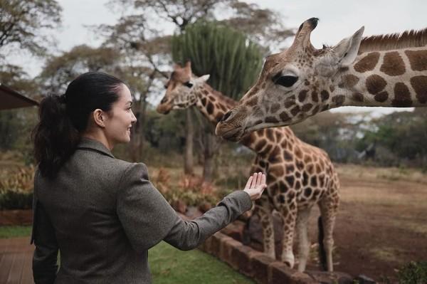 Salah satu aktivitas yang tidak dilewatkan oleh Nadya di Kenya adalah bertemu langsung dengan jerapah di habitat aslinya. Gemas dan anggun sekali! (nadyahutagalung/Instagram)