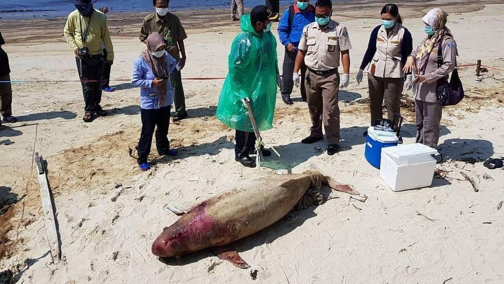 Minyak Tumpah di Teluk Balikpapan, Susi: Biota Laut Banyak Mati