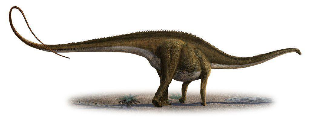 10. Diplodocus longus menjadi dinosaurus terbesar ke sepuluh dengan bobot yang dapat mencapai 16,3 ton. (Foto: magnoliabox)