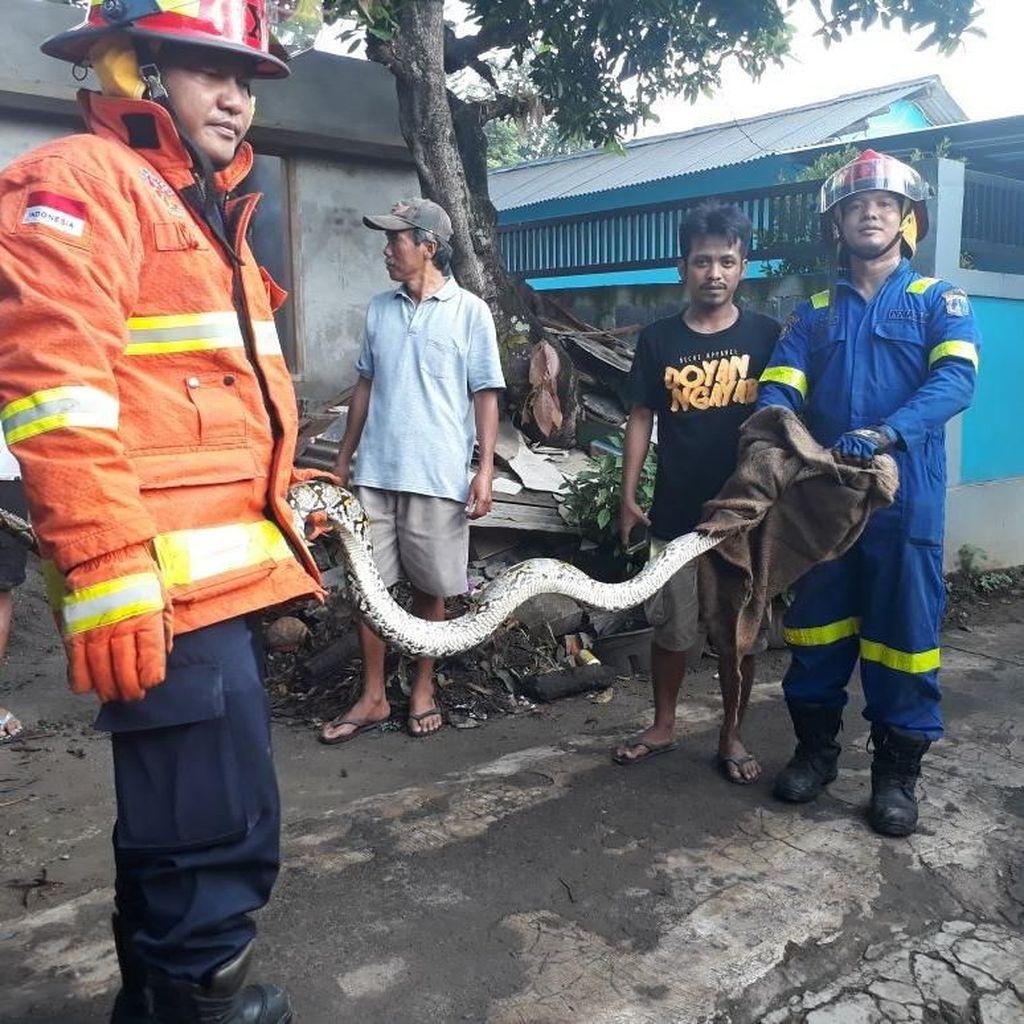 Ada Ular di RSUD Cipayung Jakarta Timur, Damkar Dipanggil