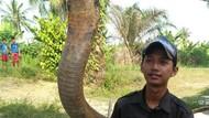 Tragedi ABG Syahril Tewas Dipatuk King Kobra, Peringatan Buat Amar