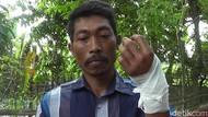 Melawan, Ular Piton Gigit Tangan Pawang Ular di Rembang