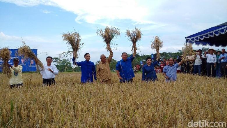 Panen Raya di Sleman, SBY Bagikan Jurus Hentikan Impor Beras
