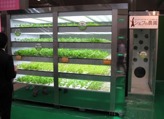 Vanding machine berisi slada segar ini hadir di Jepang pada tahun 2010. Uniknya, vending machine ini mirip seperti kebun slada. Karena slada yang ada di dalamnya tetap akan tumbuh tanpa sinar matahari. Tidak heran kalau negara ini dicap sebagai negara maju berteknologi tinggi. Foto: Istimewa