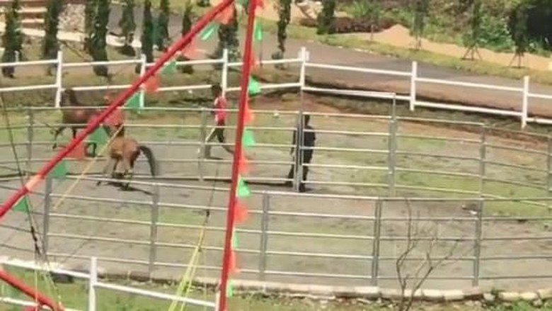 Viral Video Kuda Dipukuli dan Disiksa di Tempat Wisata