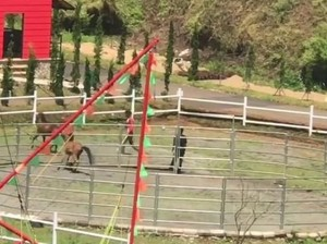 Viral Video Kuda Disiksa, The Ranch Cisarua Minta Maaf