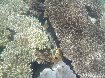 Yuk! Intip Keindahan Bawah Laut di Festival Bahari Raja Ampat