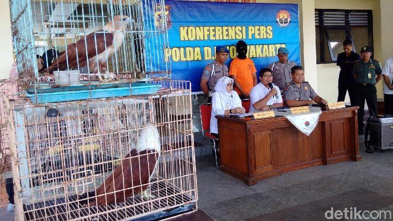 Jual Elang Dan Kakak Tua Pria Ini Ditangkap Polisi Di Yogya