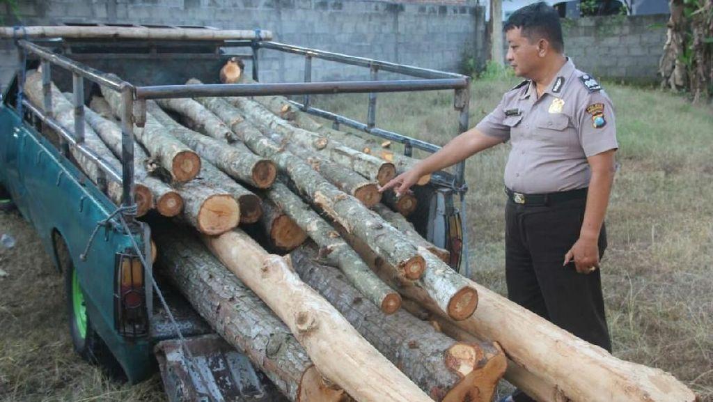 Curi Kayu di Tanah Bengkok, Kepala Dusun di Bondowoso Dipolisikan
