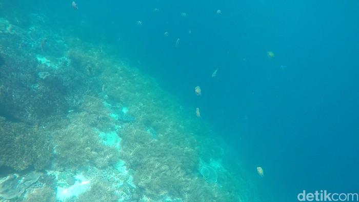 Alam bawah laut. Foto: Shinta Angriyana/detikTravel