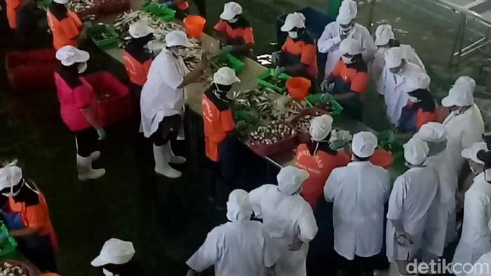 BPOM mengunjungi salah satu pabrik pengalengan ikan di Banyuwangi Jawa Timur (Foto: Ardian Fanani)