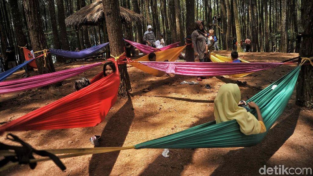 Pesona Wisata Hutan Pinus Pengger