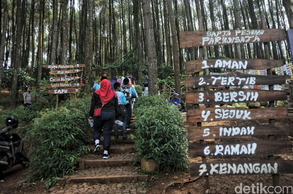 Sejumlah wisatawan bermain di Hutan Pinus Pengger, Dlingo, Bantul, Yogyakarta, Sabtu (14/4/2018). Hutan pinus yang memberikan spot foto unik serta menikmati pemandangan dari atas bukit itu menjadi destinasi wisata alternatif bagi wisatawan dari Yogyakarta hingga luar daerah.