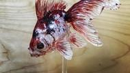 Keren! Seniman Jepang Ini Ubah Lolipop Jadi Ikan Hingga Kura-kura